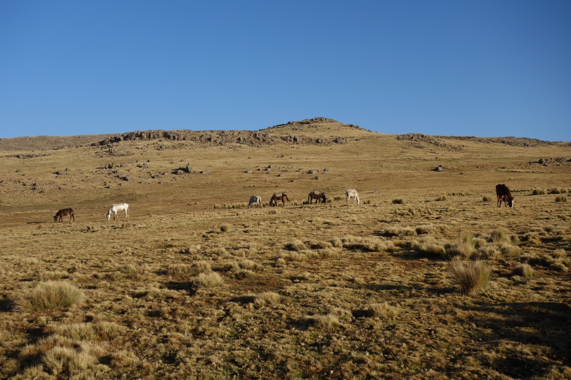 simien-mountains-horses