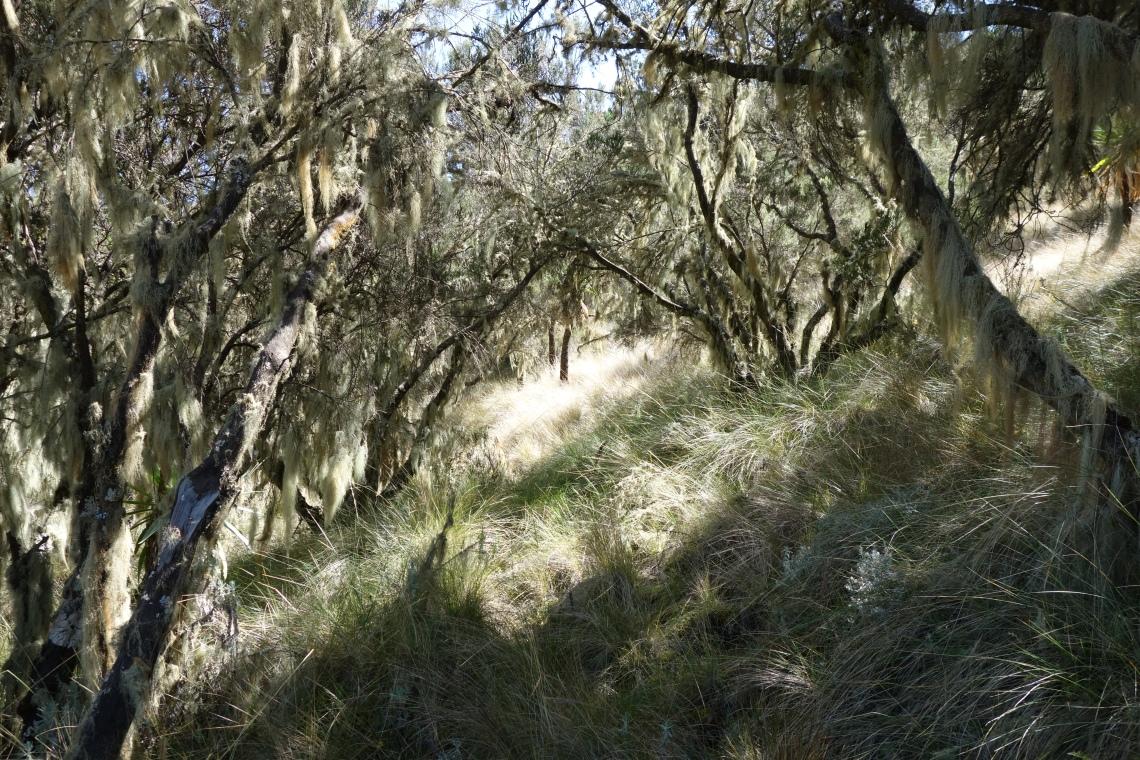simien-mountains-trees