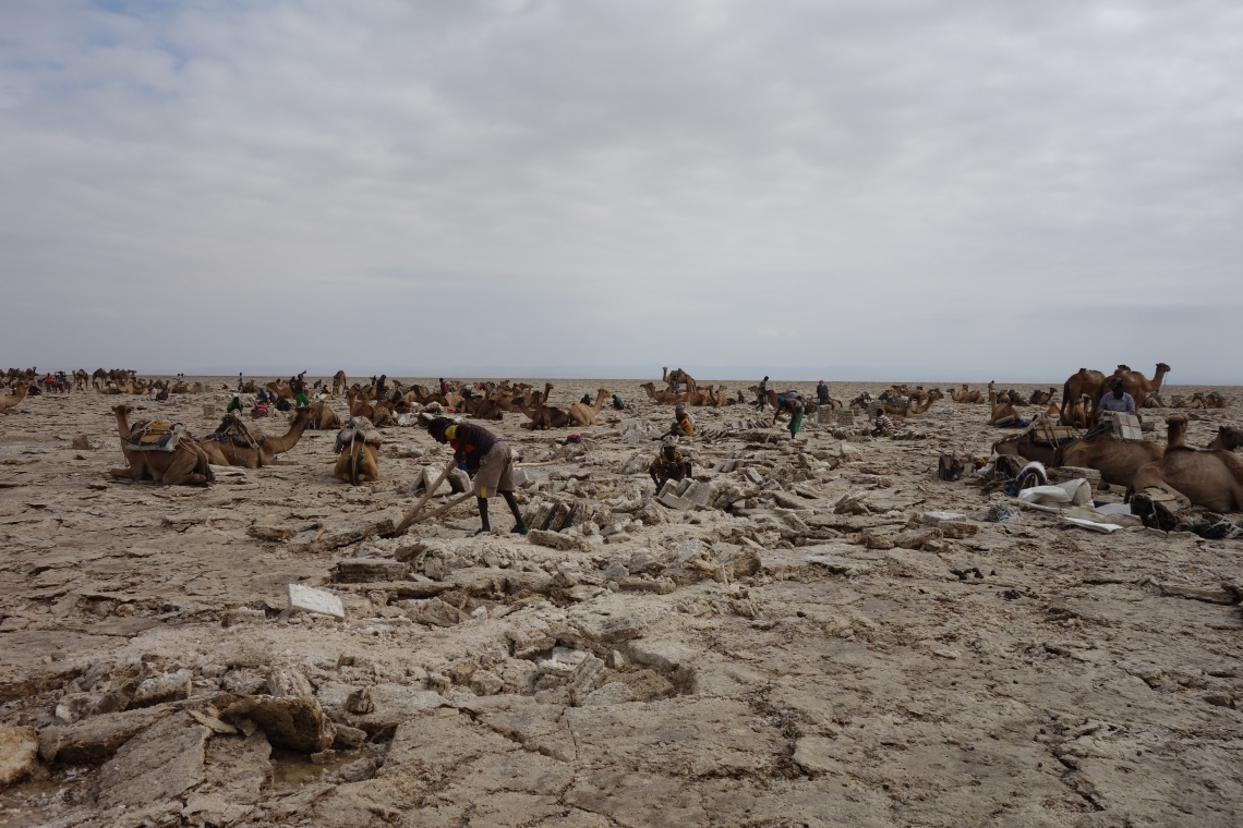 danakil depression salt mining afar camels ethiopia travel blog (1)
