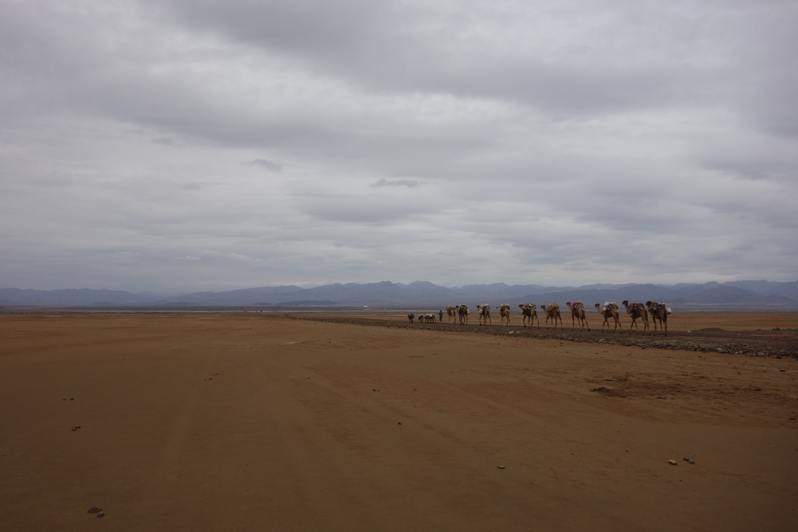 danakil depression camel caravan ethiopia travel blog
