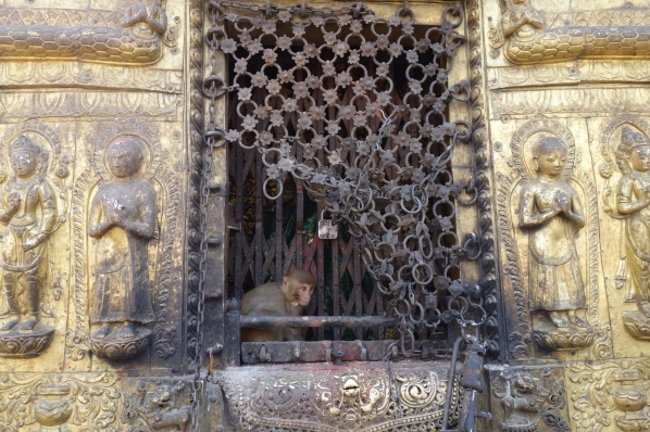 This monkey found a hiding spot inside Swayambhanath!