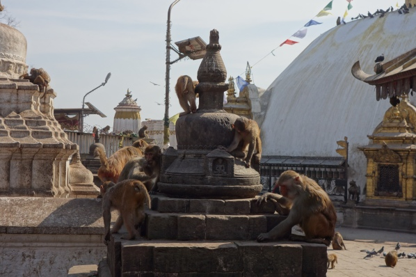 I can count at least 15 monkeys in this photo of Swayambhanath. Check the background for more!