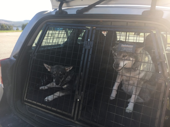 These babies were so well-behaved in the car!!