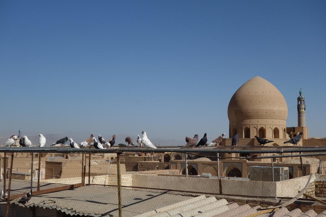 pigeons kashan rooftops iran travel blog (2)